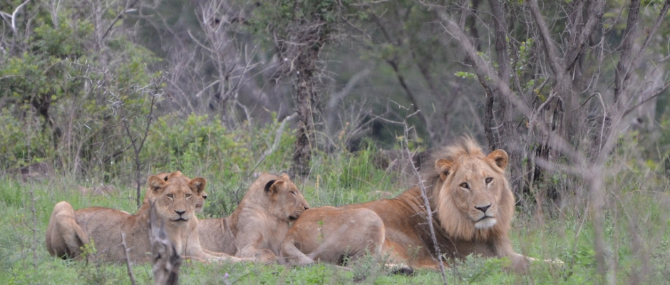 Faire un safari en Afrique du Sud