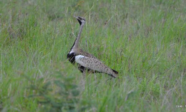 oiseau Afrique du sud safari (4)