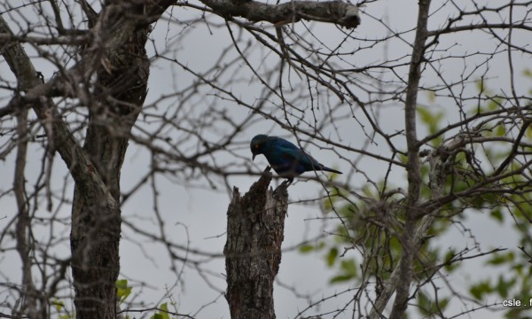 oiseau Afrique du sud safari (6)