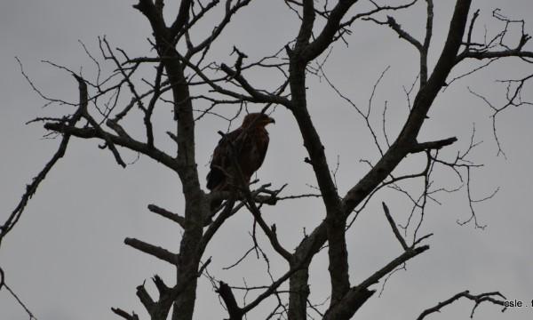 oiseau Afrique du sud safari (8)