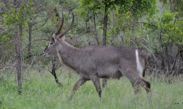 safari Afrique du sud (3)